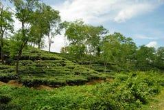 Кафе на открытом воздухе на Sylhet, Бангладеше Стоковое фото RF
