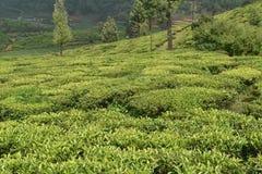 Кафе на открытом воздухе в Индии Стоковые Изображения
