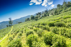 Кафе на открытом воздухе Temi Ravangla, Сиккима, Индии Стоковые Изображения