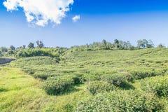 Кафе на открытом воздухе Temi Ravangla, Сиккима, Индии Стоковое фото RF