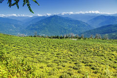Кафе на открытом воздухе Temi, Ravangla, Сикким Стоковое фото RF