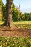Качание веревочки в дереве Стоковая Фотография