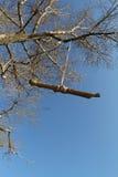 Качание веревочки дерева Стоковые Фото
