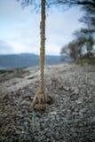 Качание веревочки над Pebble Beach Стоковая Фотография RF