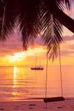 Качание веревочки на тропической ладони Стоковое Изображение