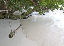 Качание веревочки от дерева морем Стоковые Фотографии RF