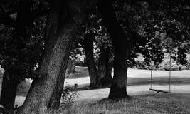 Качание в деревьях Стоковая Фотография