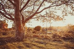Качание дерева на заходе солнца 3 стоковые изображения rf