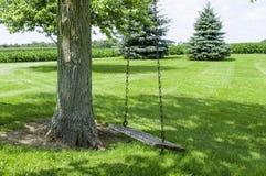 Качание дерева в тени Стоковая Фотография