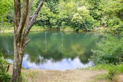 2 качания веревочки связанного к дереву над смотреть красивый пруд Стоковые Фотографии RF