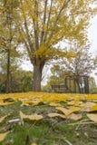 Качания в парке с желтыми упаденными листьями деревьев Стоковое фото RF
