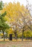 Качания в парке с желтыми упаденными листьями деревьев Стоковые Изображения