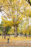 Качания в парке с желтыми упаденными листьями деревьев Стоковое Фото