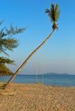 Качания на ладони на тропическом пляже Стоковая Фотография