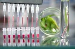 Качественное испытание зеленых цветов салата Стоковое Изображение RF