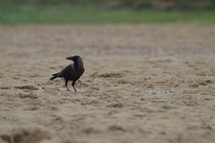 Качество птицы Стоковые Фотографии RF