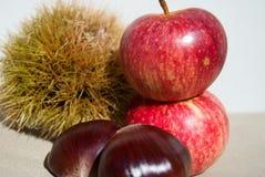 2 каштана с ежом и маленькими красными яблоками стоковое фото rf