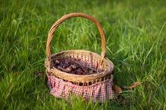Каштаны в корзине на саде Стоковое Изображение RF