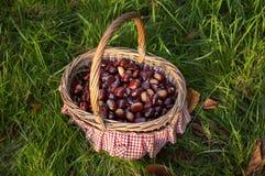 Каштаны в корзине на саде Стоковые Изображения