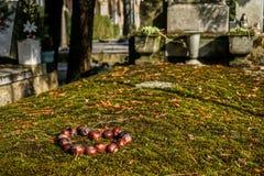 Каштаны в символической картине сердца в кладбище стоковое изображение
