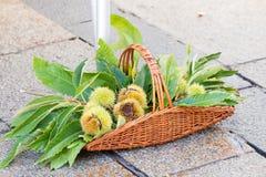 Каштаны и листья в корзине Стоковые Изображения RF