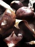 Каштаны и листья стоковые изображения