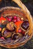 Каштан в плетеной корзине Стоковое Фото