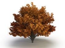 Каштан дерева стоковая фотография