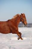 каштан освобождает лошадь Стоковые Фото
