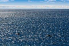 2 каяка на большом озере Стоковые Фотографии RF