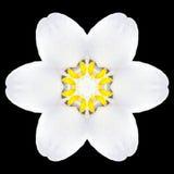 Калейдоскоп мандалы белого цветка изолированный на черноте Стоковое Изображение RF