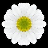 Калейдоскоп мандалы белого цветка изолированный на черноте Стоковая Фотография RF