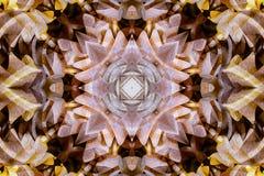 Калейдоскоп с красивым ornamental цвета Стоковое Фото