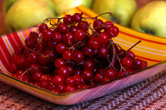Калина ягоды Стоковые Изображения RF