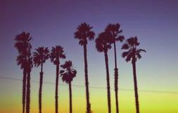 Калифорнийский заход солнца с пальмами Стоковая Фотография