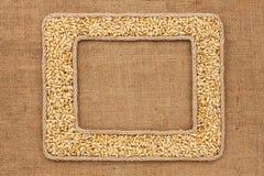 Кадр 2 сделанный веревочки с зернами ячменя на дерюге Стоковое фото RF