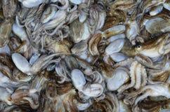 Кальмары Стоковые Изображения RF