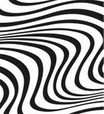 квадратная зебра Стоковая Фотография
