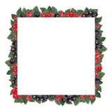 Квадратная рамка сделанная красного цвета и ягод и листьев черной смо иллюстрация штока