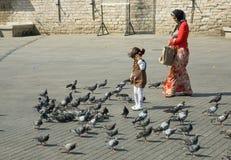 квадрат девушки питаний голубей старый Стоковое Изображение