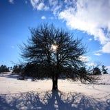 Квадратное дерево зимы Стоковые Фото
