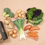 Квадратное изображение сортированных овощей и картонной коробки Стоковая Фотография