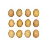Квадрат сделанный из дюжины коричневых яичек Стоковые Изображения