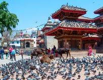 Квадрат Durbar Катманду, Непал Стоковые Изображения