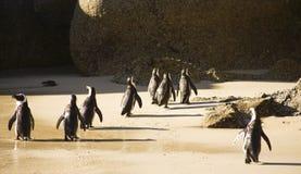 Кейптаун - африканские пингвины Стоковое фото RF