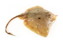 кек рыб стоковое изображение