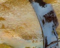 келп стоковое изображение rf