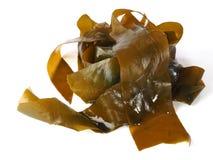 Келп Kombu - водоросль Kombu стоковое фото rf