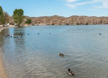 Кемпинг бухты телефона, Mohave озера стоковые изображения
