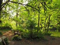 Кемпинг в лесе рядом с рекой Стоковое Изображение RF